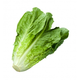 Lattichsalat