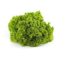 Lollo grün