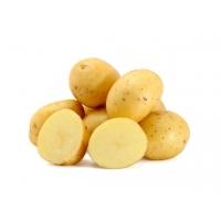 Kartoffeln mehlig