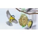 Vogelfutter und -häuschen